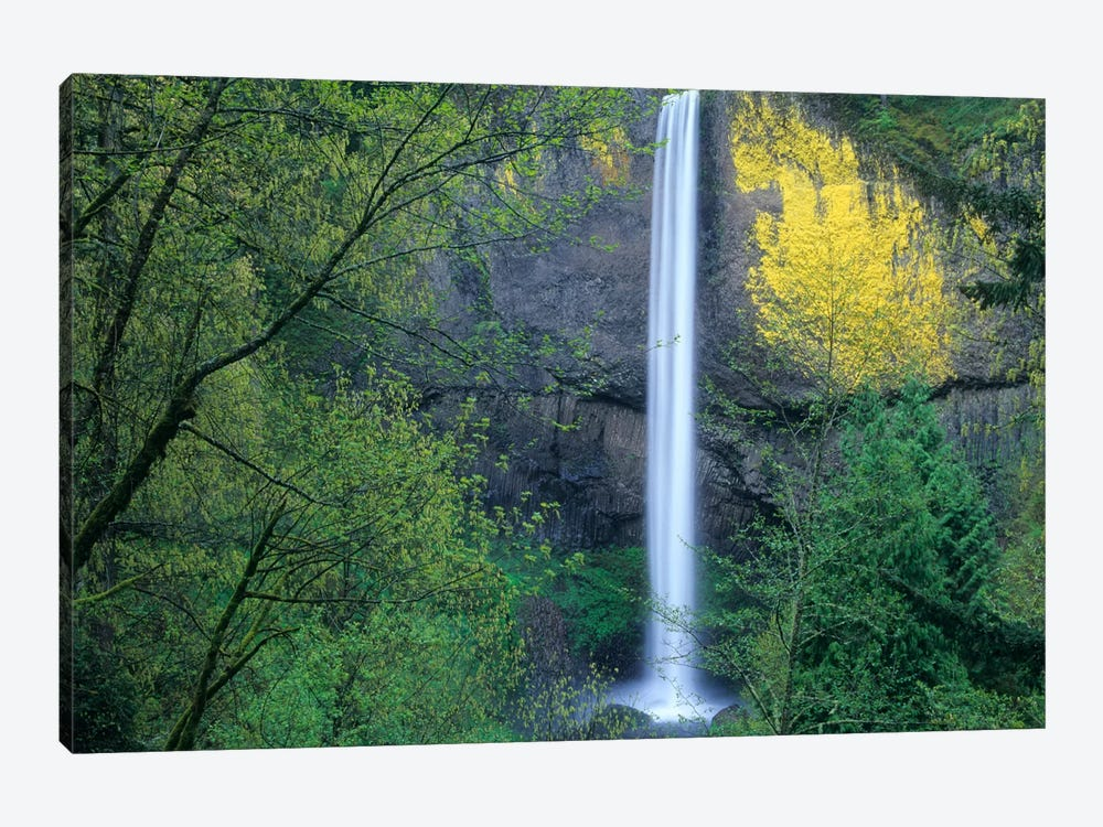 Latourell Falls, Columbia River Gorge Near Portland, Oregon II by Tim Fitzharris 1-piece Canvas Print