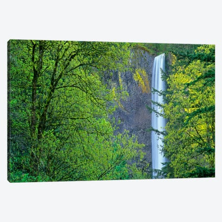Latourell Falls, Columbia River Gorge Near Portland, Oregon III Canvas Print #TFI515} by Tim Fitzharris Art Print