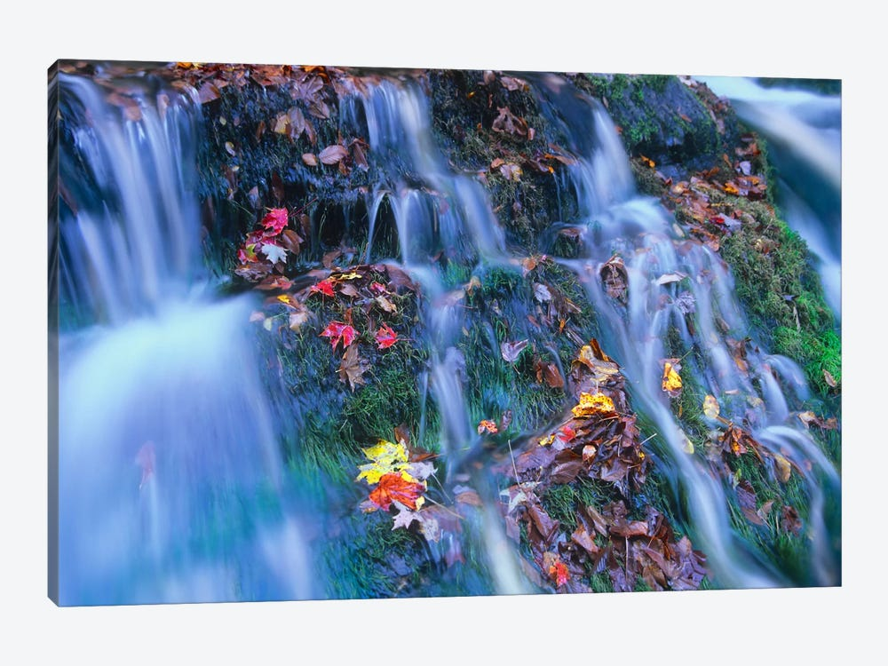 Laurel Creek Cascades, Great Smoky Mountains National Park, Tennessee by Tim Fitzharris 1-piece Canvas Print
