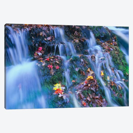 Laurel Creek Cascades, Great Smoky Mountains National Park, Tennessee Canvas Print #TFI516} by Tim Fitzharris Canvas Print