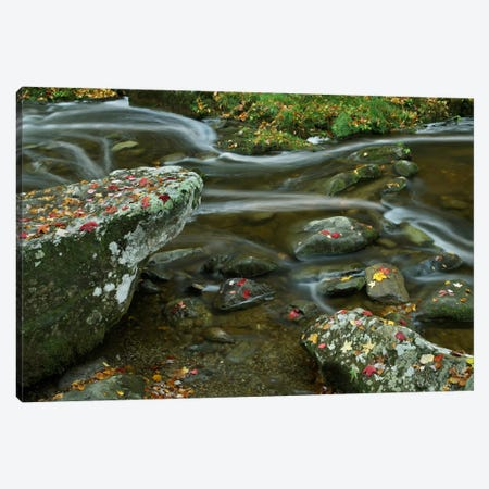 Laurel Creek, Great Smoky Mountains National Park, Tennessee Canvas Print #TFI517} by Tim Fitzharris Canvas Print