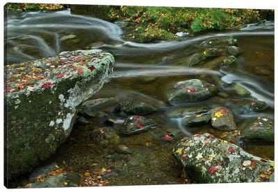 Laurel Creek, Great Smoky Mountains National Park, Tennessee Canvas Art Print