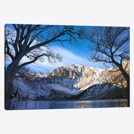 Laurel Mountain And Convict Lake Framed By Barren Trees In Winter, Eastern Sierra Nevada, California Canvas Print #TFI518} by Tim Fitzharris Canvas Wall Art