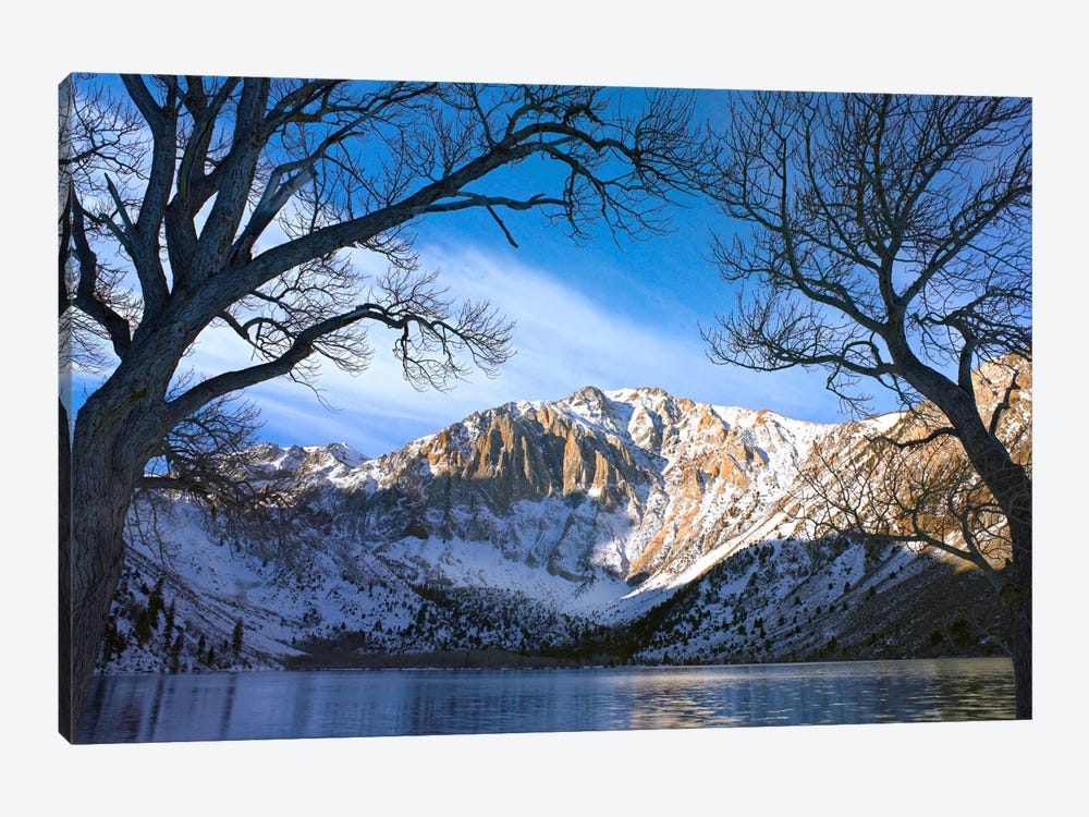 Laurel Mountain And Convict Lake Framed By Barren Trees In Winter, Eastern Sierra Nevada, California by Tim Fitzharris 1-piece Canvas Print