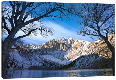 Laurel Mountain And Convict Lake Framed By Barren Trees In Winter, Eastern Sierra Nevada, California Canvas Art Print