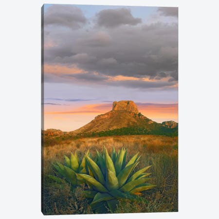 Lechuguilla Agave With Casa Grande In The Distance, Big Bend National Park, Texas Canvas Print #TFI523} by Tim Fitzharris Canvas Art Print