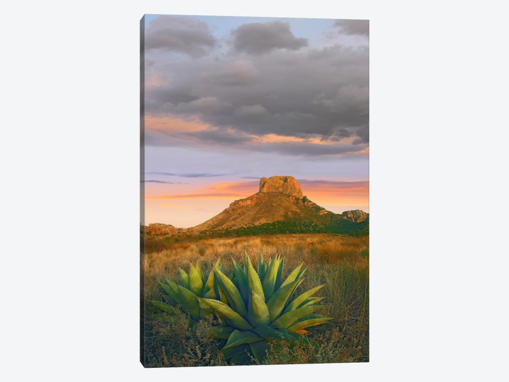 Lechuguilla Agave With Casa Grande In The Distance, Big Bend National Park, Texas by Tim Fitzharris 1-piece Canvas Art Print