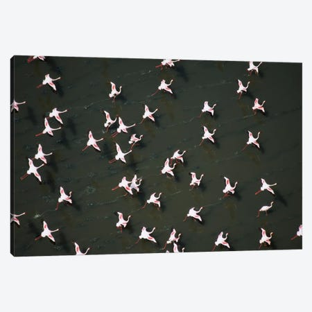 Lesser Flamingo Flock Taking Flight From The Surface Of A Lake, Kenya II 3-Piece Canvas #TFI527} by Tim Fitzharris Canvas Art