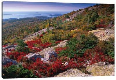 Atlantic Coast From Cadillac Mountain, Acadia National Park, Maine Canvas Art Print