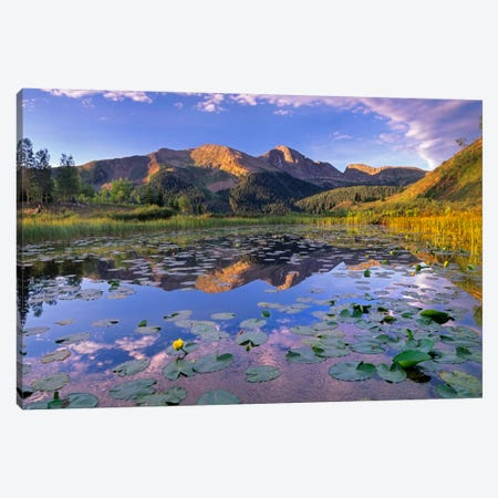 Lily Pads And Reflection Of Snowdon Peak In Pond, West Needle Mountains, Colorado Canvas Print #TFI530} by Tim Fitzharris Canvas Artwork