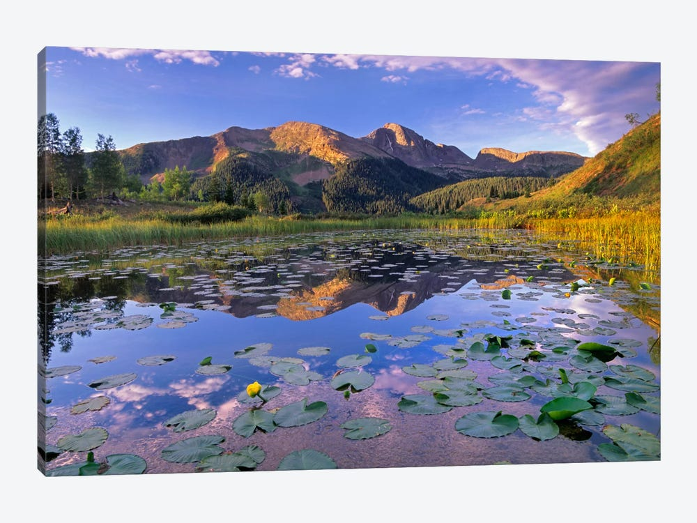 Lily Pads And Reflection Of Snowdon Peak In Pond, West Needle Mountains, Colorado by Tim Fitzharris 1-piece Canvas Print