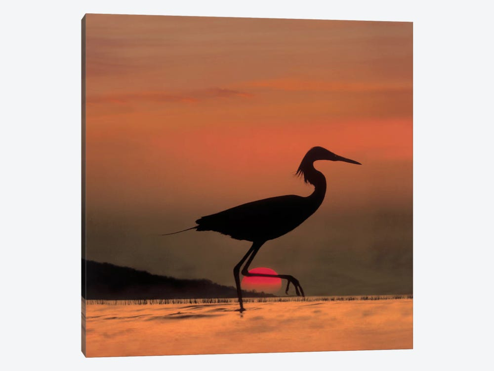Little Egret Silhouetted At Sunset, Africa by Tim Fitzharris 1-piece Canvas Artwork