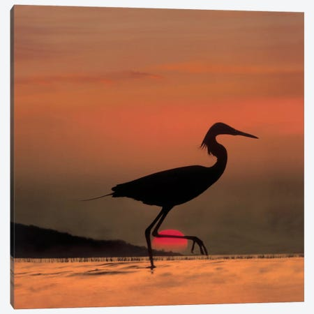 Little Egret Silhouetted At Sunset, Africa Canvas Print #TFI531} by Tim Fitzharris Canvas Wall Art