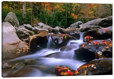 Little Pigeon River, Cascading Among Rocks And Colorful Fall Maple Leaves, Great Smoky Mountains National Park, Tennessee I Canvas Art Print