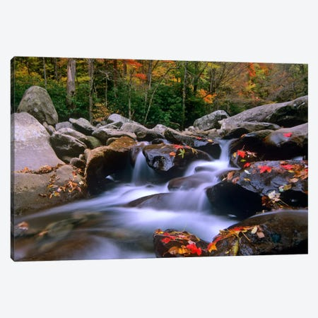 Little Pigeon River, Cascading Among Rocks And Colorful Fall Maple Leaves, Great Smoky Mountains National Park, Tennessee I Canvas Print #TFI533} by Tim Fitzharris Canvas Art