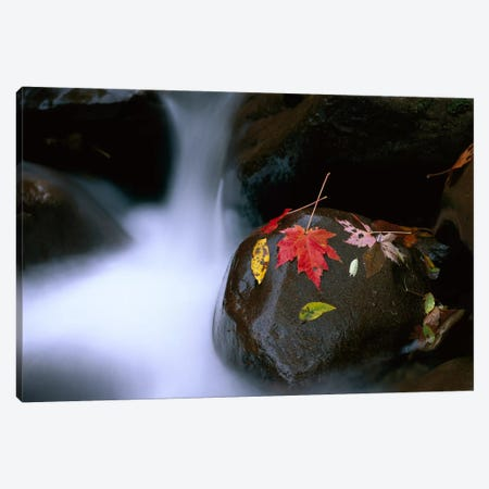 Little Pigeon River, Cascading Among Rocks And Colorful Fall Maple Leaves, Great Smoky Mountains National Park, Tennessee II Canvas Print #TFI534} by Tim Fitzharris Art Print