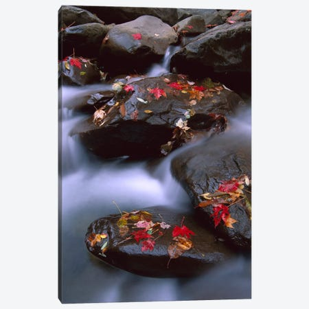 Little Pigeon River, Cascading Among Rocks And Colorful Fall Maple Leaves, Great Smoky Mountains National Park, Tennessee III Canvas Print #TFI535} by Tim Fitzharris Canvas Print