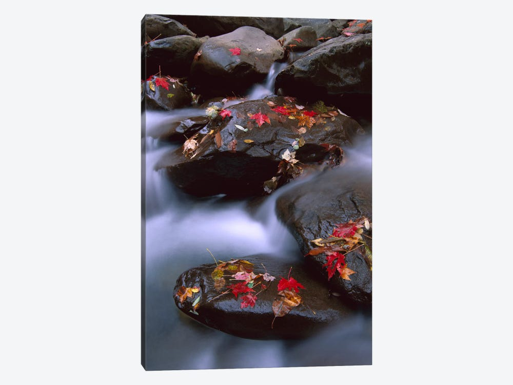 Little Pigeon River, Cascading Among Rocks And Colorful Fall Maple Leaves, Great Smoky Mountains National Park, Tennessee III by Tim Fitzharris 1-piece Canvas Wall Art