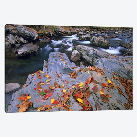 Little Pigeon River, Great Smoky Mountains National Park, Tennessee Canvas Print #TFI536} by Tim Fitzharris Canvas Print
