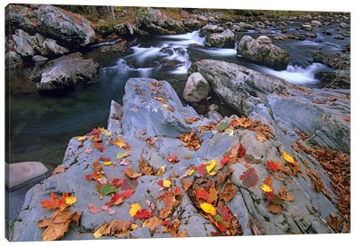 Little Pigeon River, Great Smoky Mountains National Park, Tennessee Canvas Art Print