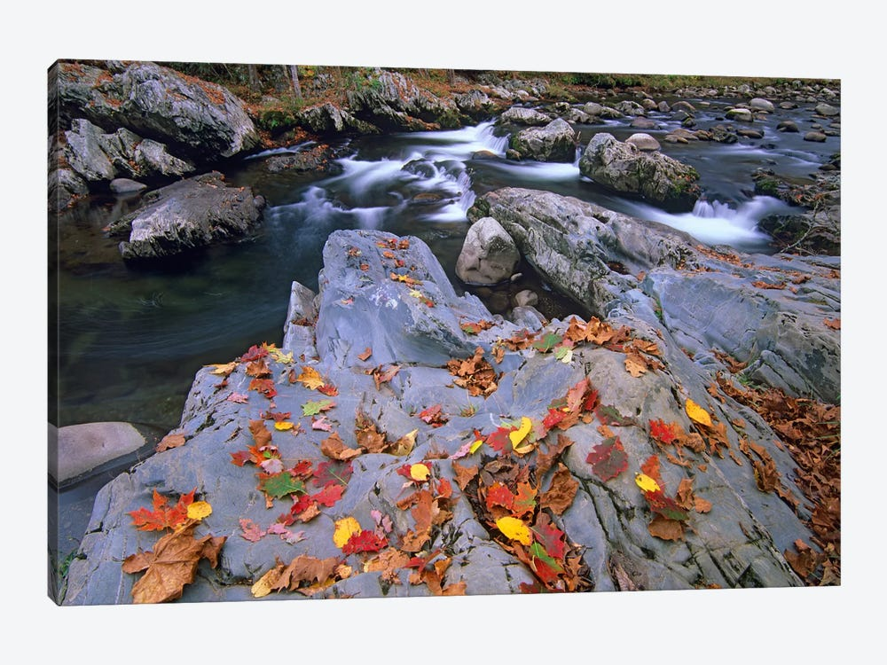 Little Pigeon River, Great Smoky Mountains National Park, Tennessee by Tim Fitzharris 1-piece Art Print