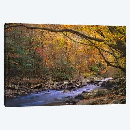 Little River Flowing Through Autumn Forest, Great Smoky Mountains National Park, Tennessee Canvas Print #TFI537} by Tim Fitzharris Canvas Art Print