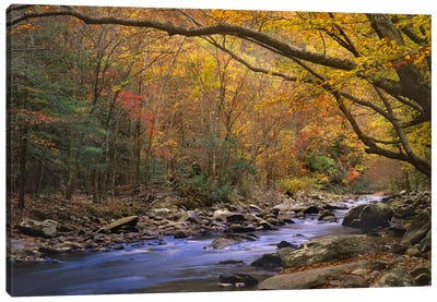 Little River Flowing Through Autumn Forest, Great Smoky Mountains National Park, Tennessee Canvas Art Print
