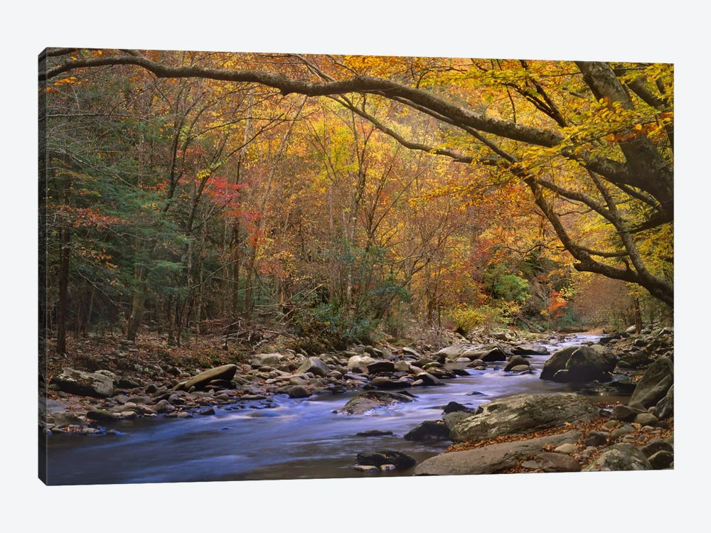 Little River Flowing Through Autumn Forest, Great Smoky Mountains National Park, Tennessee by Tim Fitzharris 1-piece Canvas Art