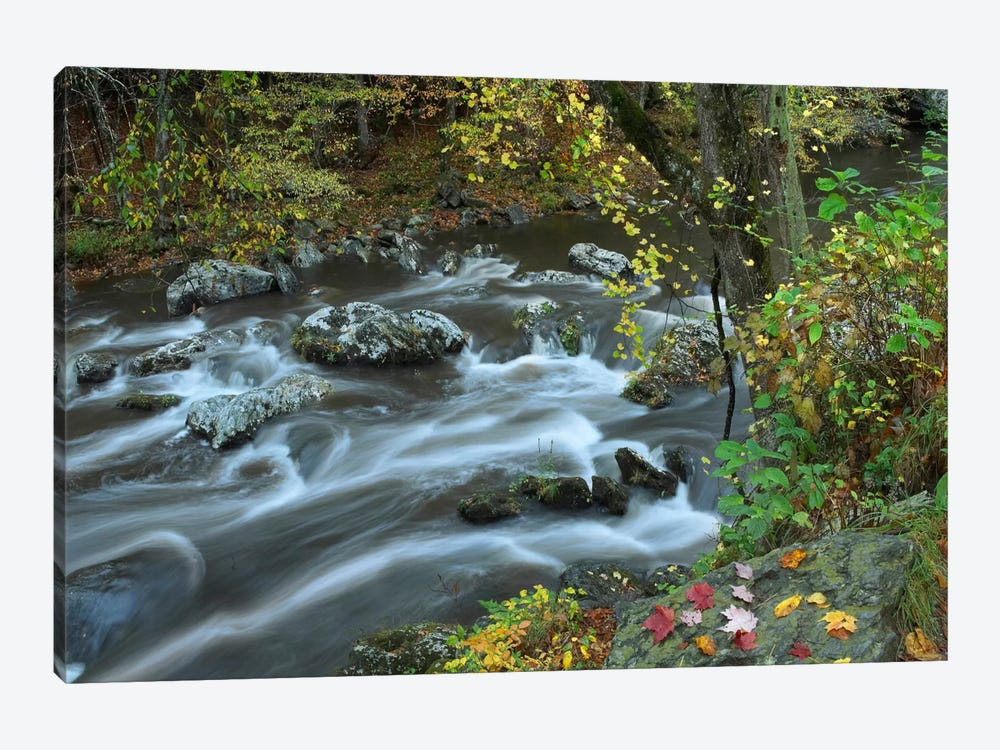 Little River, Great Smoky Mountains National Park, Tennessee by Tim Fitzharris 1-piece Art Print