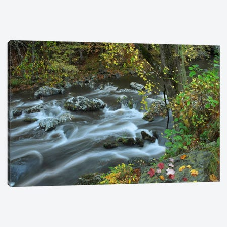 Little River, Great Smoky Mountains National Park, Tennessee Canvas Print #TFI538} by Tim Fitzharris Canvas Wall Art