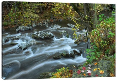 Little River, Great Smoky Mountains National Park, Tennessee Canvas Art Print