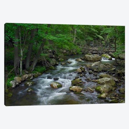 Little Stony Creek Flowing Through Jefferson National Forest, Virginia Canvas Print #TFI539} by Tim Fitzharris Canvas Art
