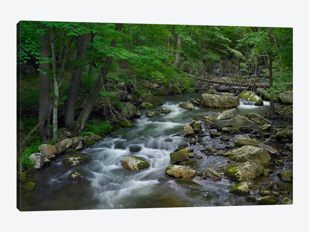 Little Stony Creek Flowing Through Jefferson National Forest, Virginia by Tim Fitzharris 1-piece Canvas Art