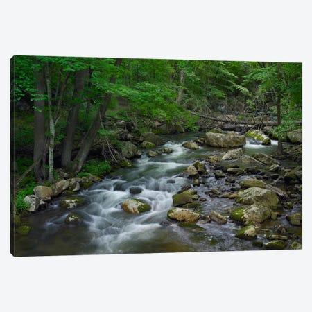Little Stony Creek Flowing Through Jefferson National Forest, Virginia Canvas Print #TFI539} by Tim Fitzharris Canvas Art