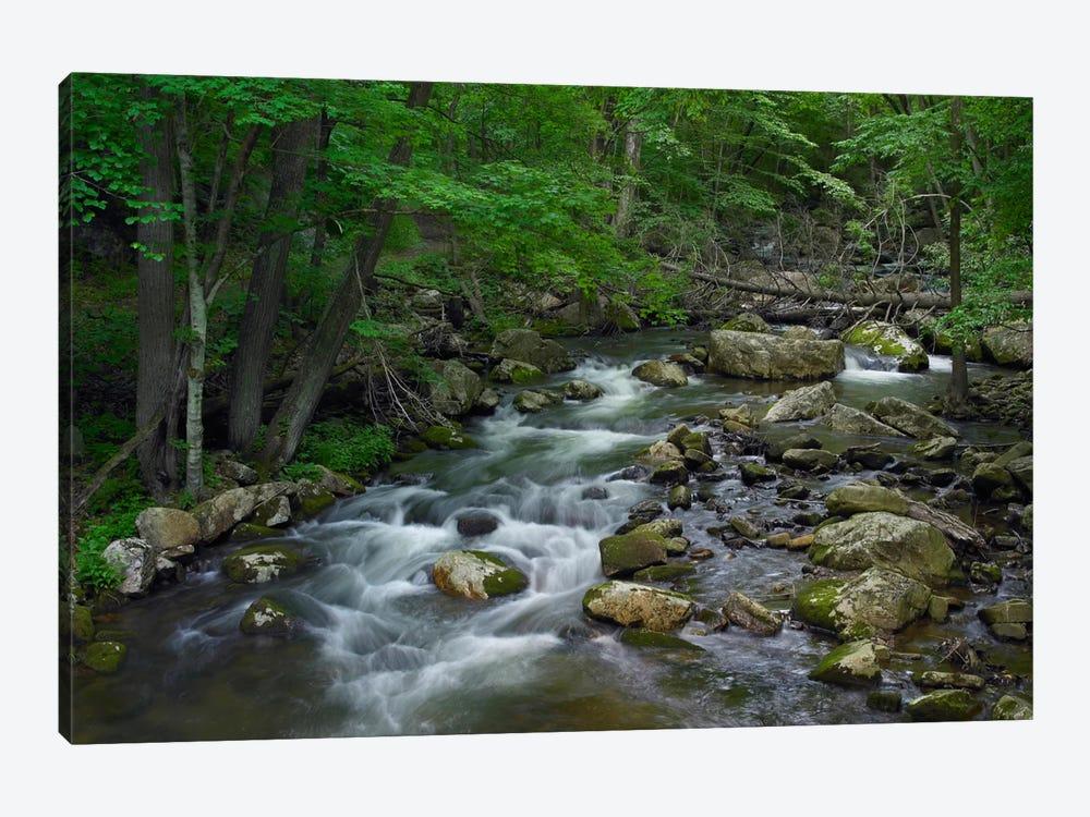 Little Stony Creek Flowing Through Jefferson National Forest, Virginia by Tim Fitzharris 1-piece Canvas Art