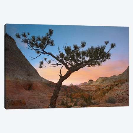 Lone Pine Tree With East And West Temples In The Background, Zion National Park, Utah Canvas Print #TFI541} by Tim Fitzharris Canvas Print