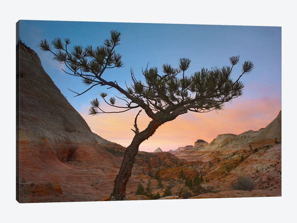 Lone Pine Tree With East And West Temples In The Background, Zion National Park, Utah by Tim Fitzharris 1-piece Art Print