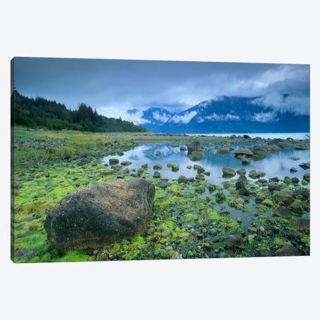 Low Tide Revealing Algae Covered Rocks, Alaska Canvas Print #TFI548} by Tim Fitzharris Canvas Art Print