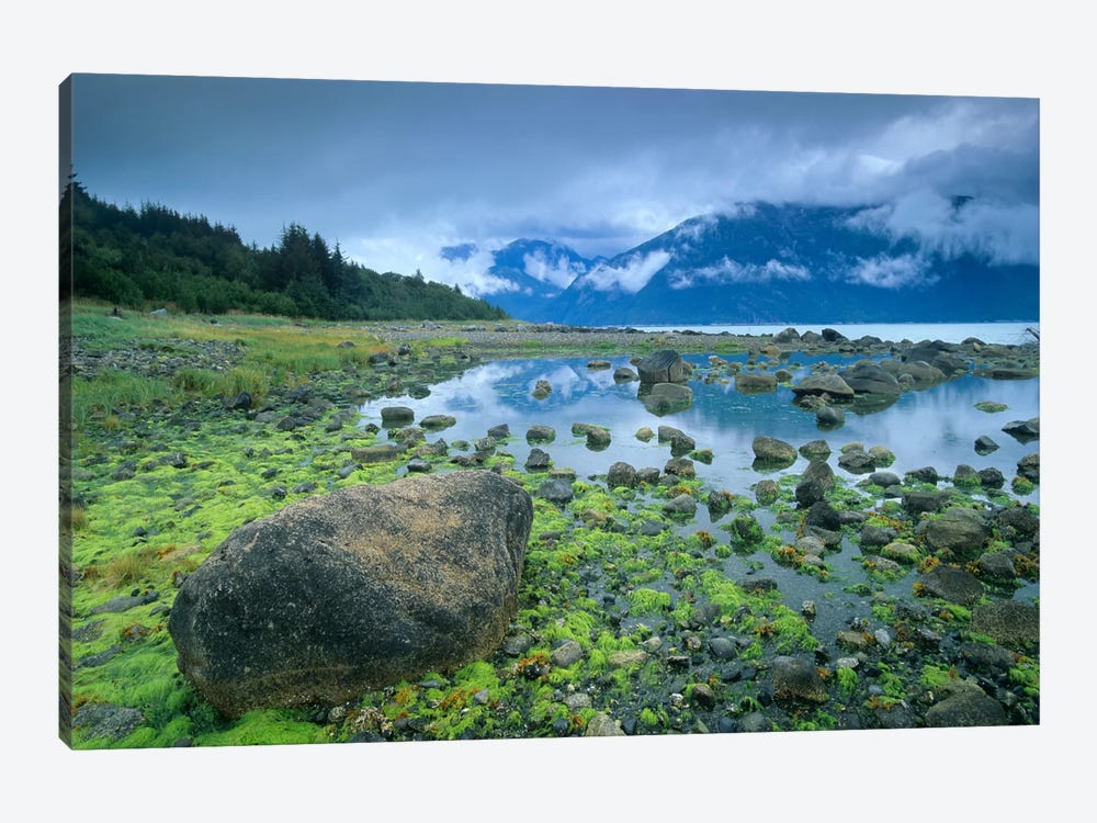 Low Tide Revealing Algae Covered Rocks, Alaska by Tim Fitzharris 1-piece Canvas Art