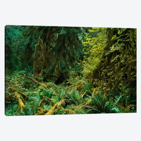 Lush Vegetation In The Hoh Rain Forest, Olympic National Park, Washington Canvas Print #TFI558} by Tim Fitzharris Canvas Wall Art