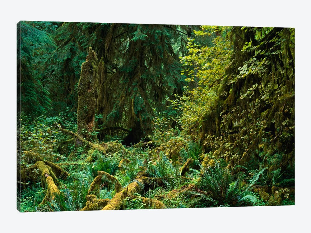Lush Vegetation In The Hoh Rain Forest, Olympic National Park, Washington by Tim Fitzharris 1-piece Canvas Print