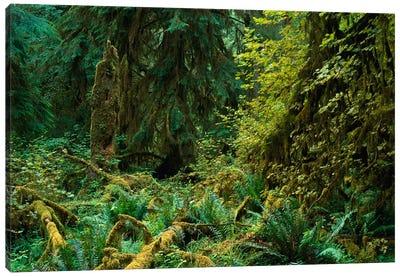 Lush Vegetation In The Hoh Rain Forest, Olympic National Park, Washington Canvas Art Print