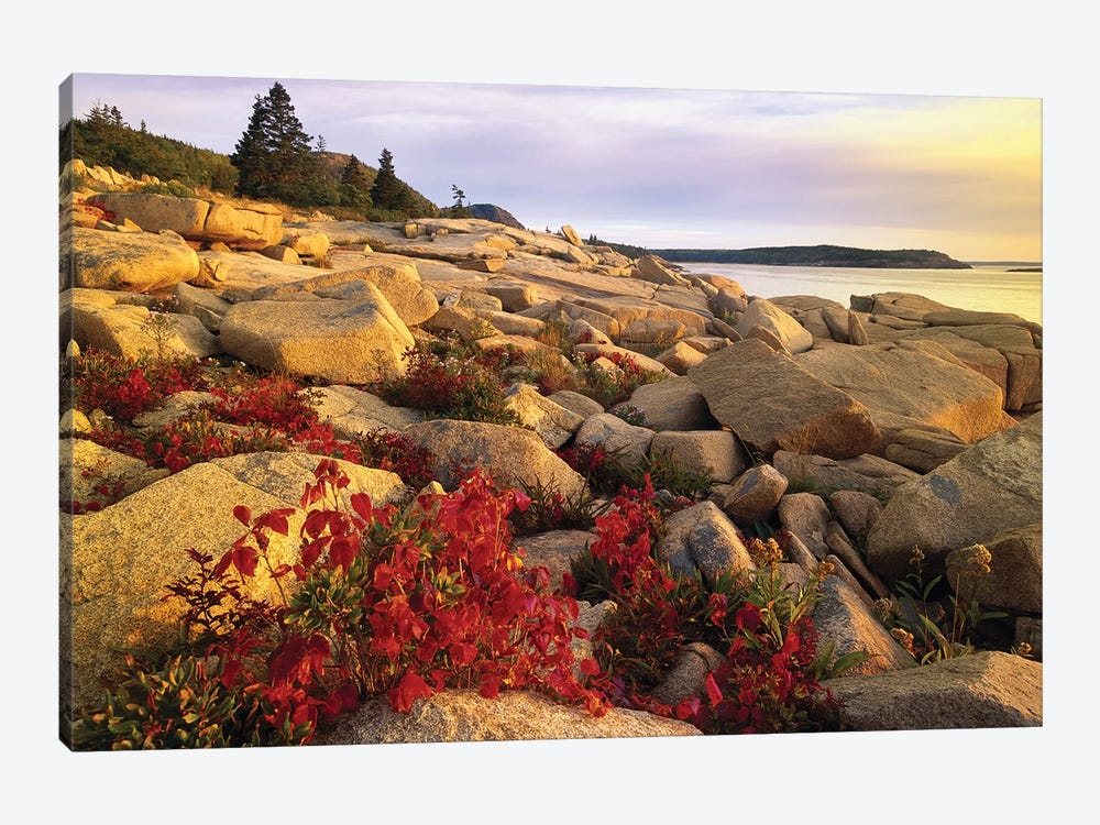 Atlantic Coast Near Thunder Hole, Acadia National Park, Maine III by Tim Fitzharris 1-piece Canvas Art