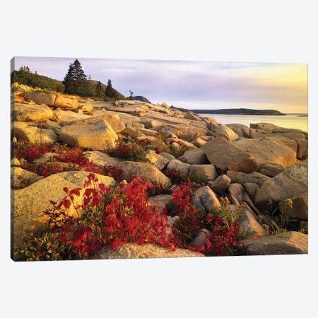 Atlantic Coast Near Thunder Hole, Acadia National Park, Maine III Canvas Print #TFI55} by Tim Fitzharris Canvas Art