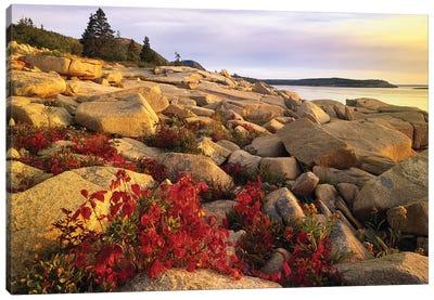Atlantic Coast Near Thunder Hole, Acadia National Park, Maine III Canvas Art Print