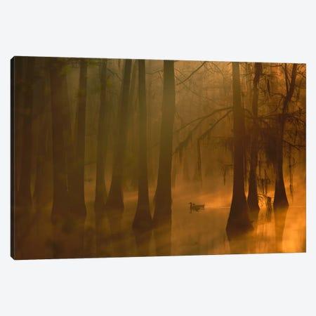 Mallard Pair In Dwarf Cypress Swamp, Calcasieu River, Lake Charles, Louisiana Canvas Print #TFI562} by Tim Fitzharris Art Print