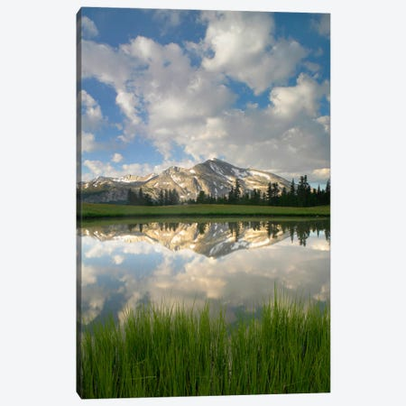Mammoth Peak And Scattered Clouds Reflected In Seasonal Pool, Upper Dana Meadow, Yosemite National Park, California I Canvas Print #TFI563} by Tim Fitzharris Canvas Print
