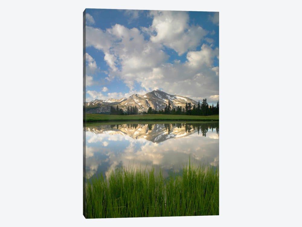 Mammoth Peak And Scattered Clouds Reflected In Seasonal Pool, Upper Dana Meadow, Yosemite National Park, California I by Tim Fitzharris 1-piece Art Print