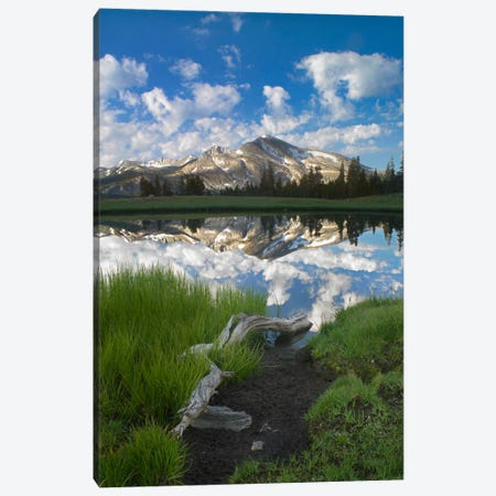 Mammoth Peak And Scattered Clouds Reflected In Seasonal Pool, Upper Dana Meadow, Yosemite National Park, California II Canvas Print #TFI564} by Tim Fitzharris Canvas Wall Art