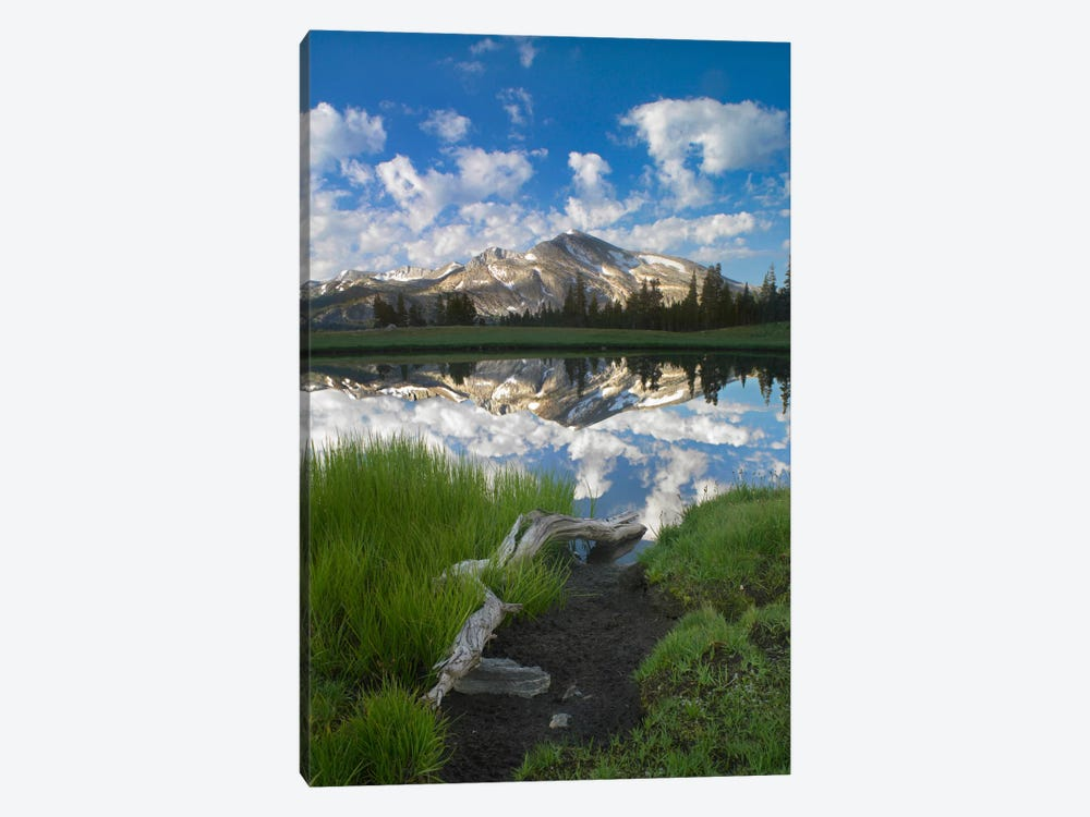 Mammoth Peak And Scattered Clouds Reflected In Seasonal Pool, Upper Dana Meadow, Yosemite National Park, California II by Tim Fitzharris 1-piece Canvas Art